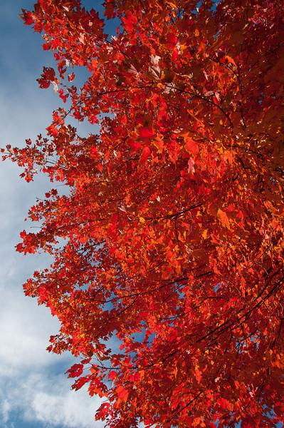 fall19.jpg