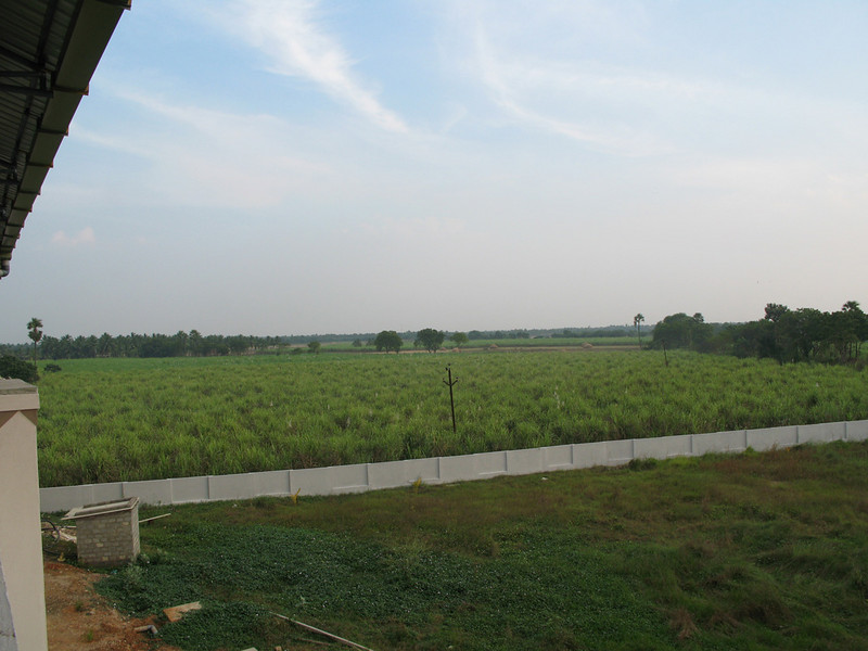 Surrounding the property are fields of sugarcane.