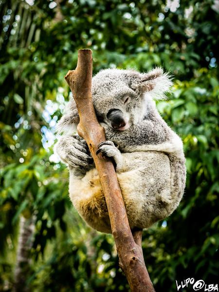Australia-1030.jpg