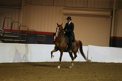 113 531 HA/AA English Pleasure  Junior Horse