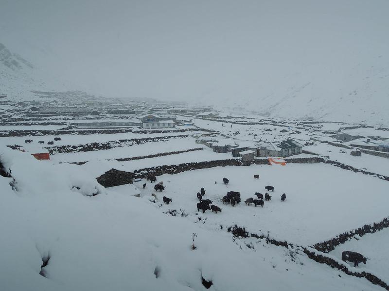 2013-Nepal-2866.jpg