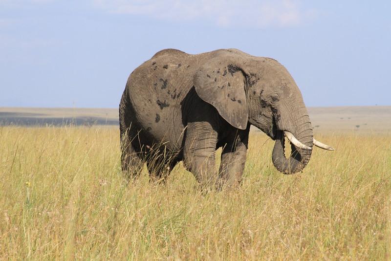 Kenya Part2 '15 036.JPG