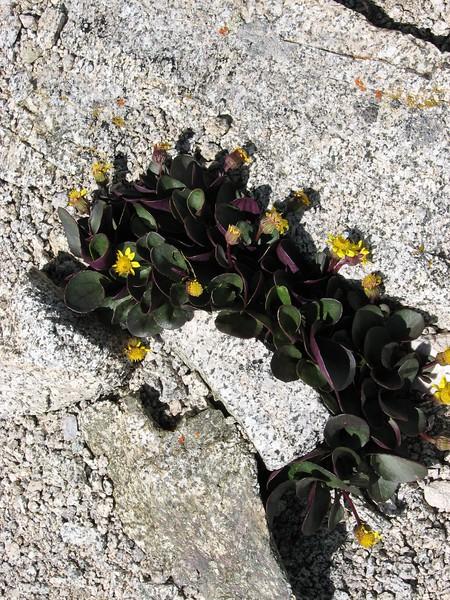 amh FLOWERS (1317).jpg