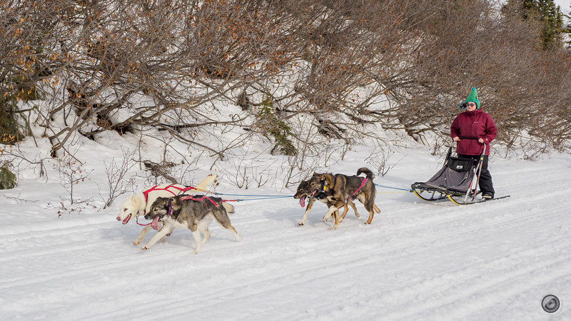 20190325_Blaire_and_Liz_Mushing_39.jpg