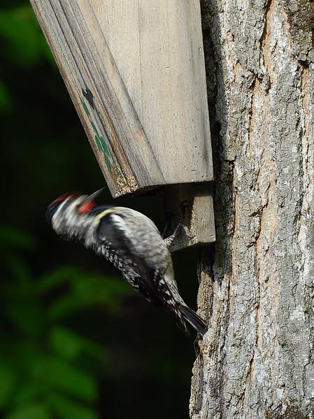 Pecking away....