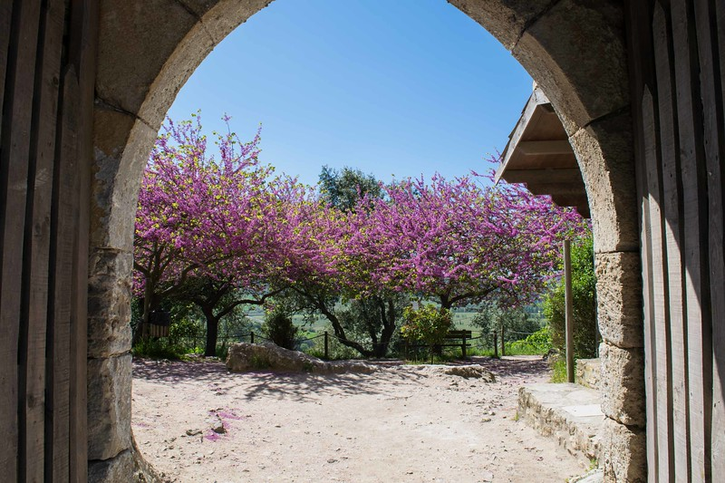 archway with blooming pink trees on the other side