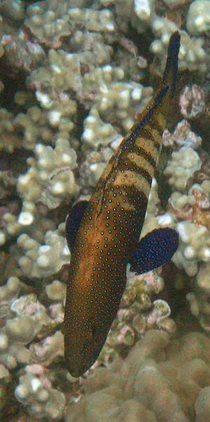 487- 20080416- Hawaii 20-Snorkelling IMG_0709.jpg