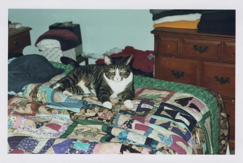 2005_Cats_0004.jpg