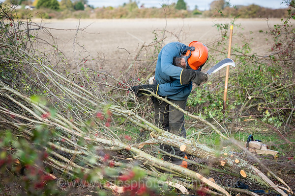 National Hedgelaying Competition 2018 Barton