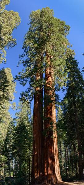 CA-Sequoia National Park