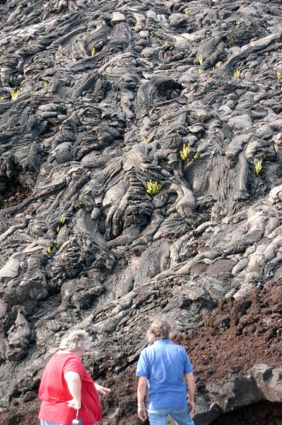 257- 20080412- Hawaii 15- Volcano Nat'l Park DSC_3124.jpg