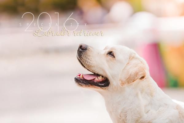 Labrador Retriever Specialty, 10.07.2016