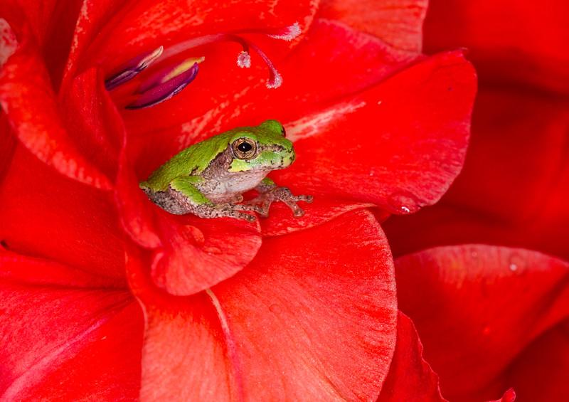 Treefrog and Gladiolus Complete.jpg