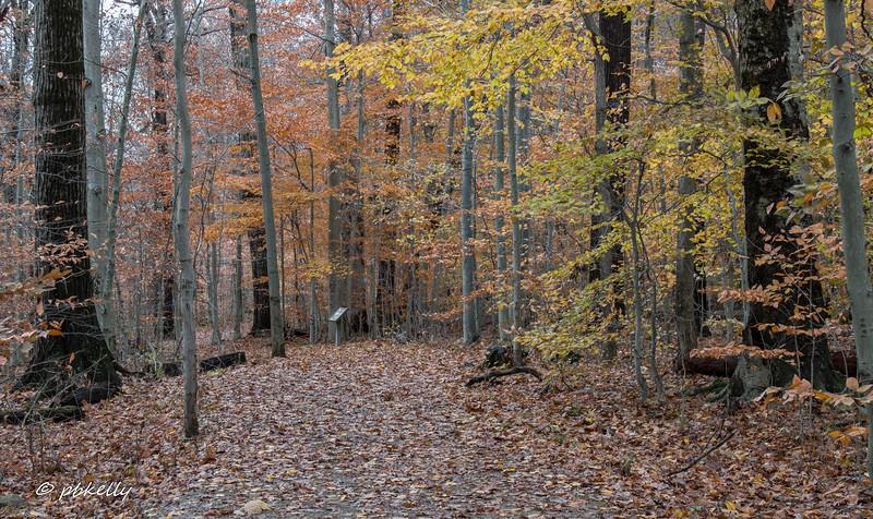 fall scene 111917-2.jpg