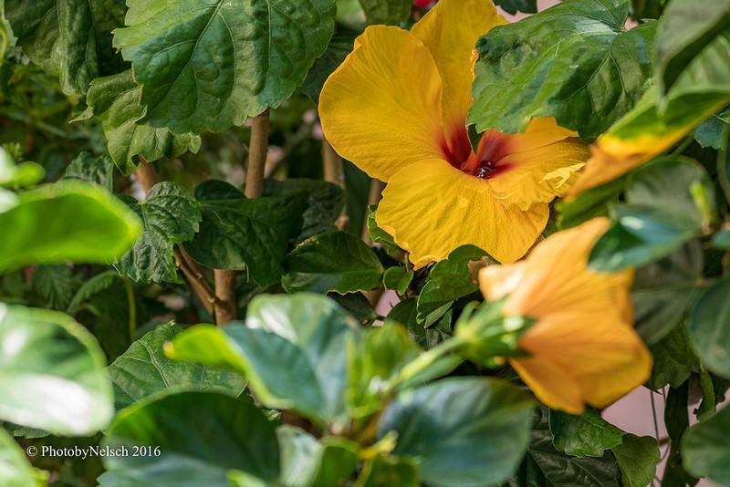 Don Egan's Flowers -142.jpg