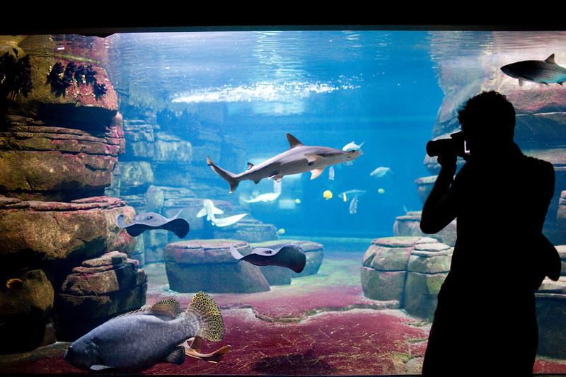 Visitor taking pictures of sharks and other fishes, Berlin zoo, Germany