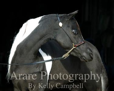 Black & White Sr. mare