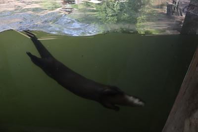 05 - Potter Park Zoo