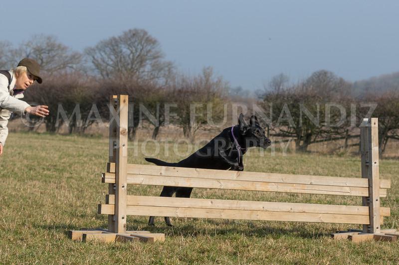 Dog Training Novice GD Feb2019-5993.jpg
