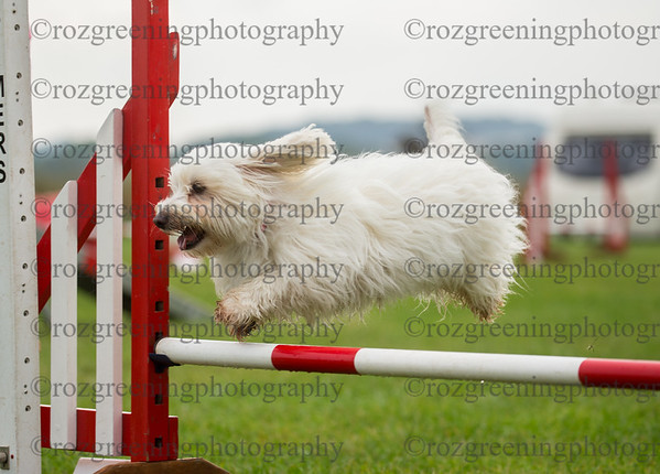 Bromsgrove Sunday Ring 3 Small Agility Combined 1-3
