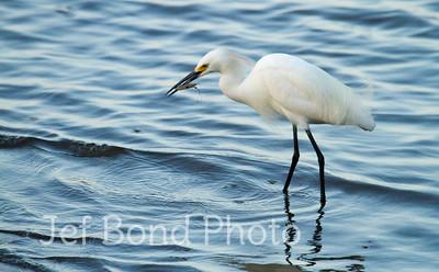 Wild Birds of Cumberland