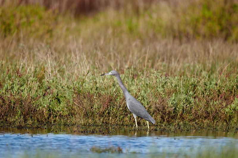 20181103 - Brazoria Wildlife Refuge-85B_4030.jpg