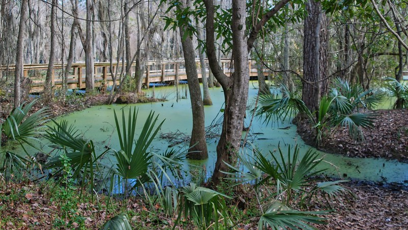 Audubon Swamp Boardwalk