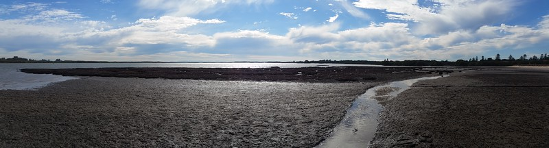 Oyster Reef Panorama