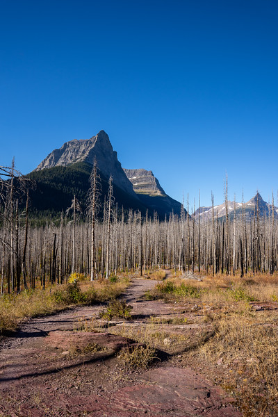 Citadel Mountain and the Burned Forest from the St Mary Waterfall Trail in Glacier National Park