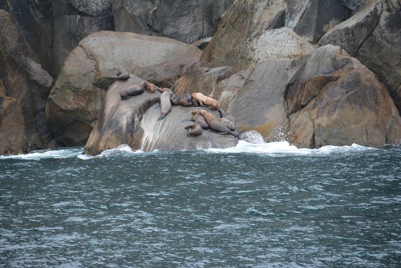 Kenai-Fjords-56.jpg