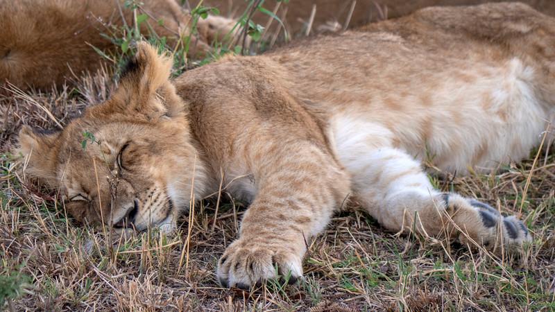 Tanzania-Serengeti-National-Park-Safari-Lion-10.jpg