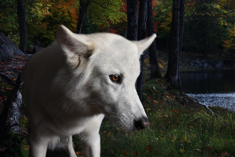 Husky-1.jpg