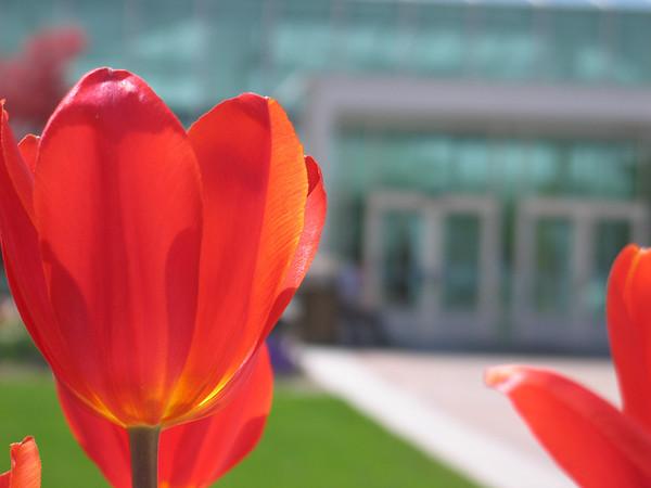 Spring Scenery 2009
