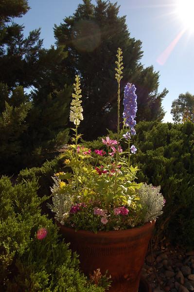 Outdoors in Sierra Vista, AZ