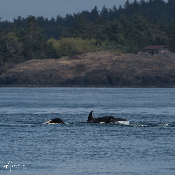 2019-08-31 - Whale Watching-2435_edit.jpg