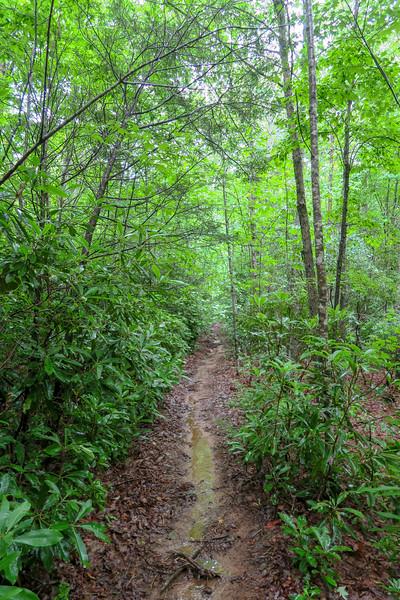Barnett Branch Trail -- 3,320'