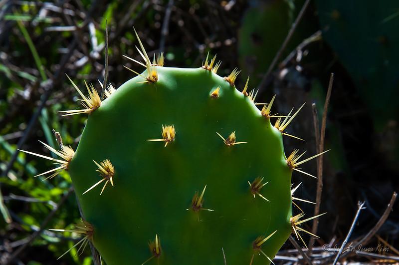 Mexico-Veracruz-atmex-9662.jpg