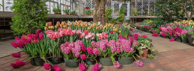 2019 - Spring blooms at the conservatories