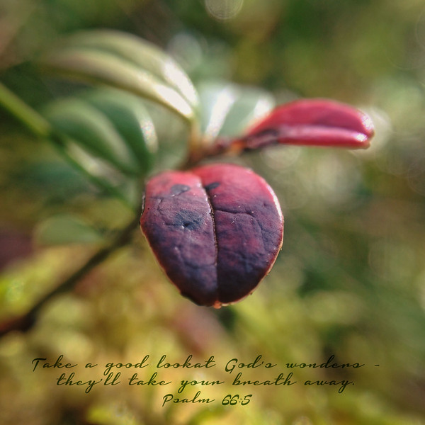 19_Psalm66-5_NJ_2017-9-10.jpg