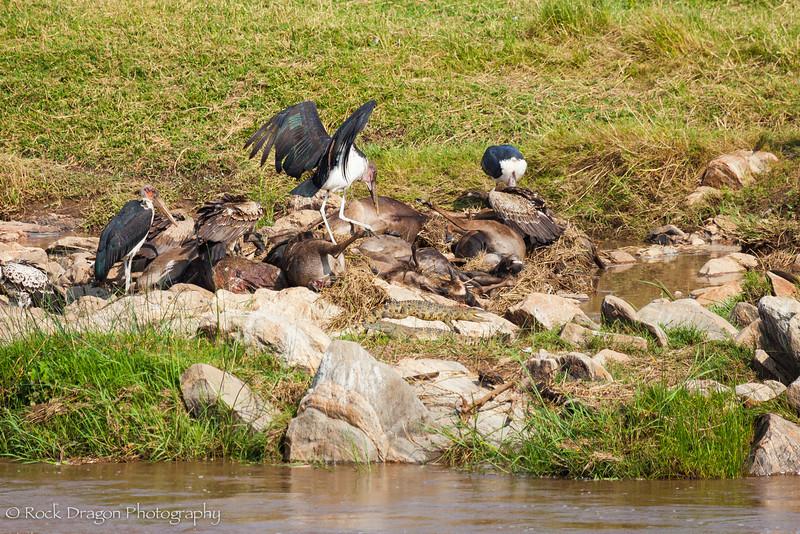 North_Serengeti-86.jpg