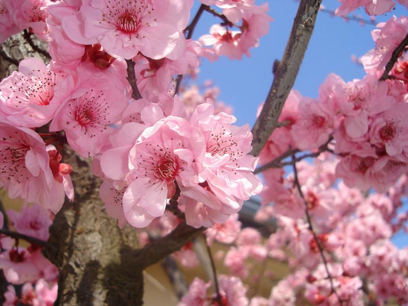 2006 Spring Bloom 001.jpg