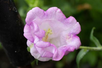 Raincoast Flowers