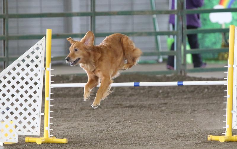 3-10-2019 Bloodhound-0977.jpg