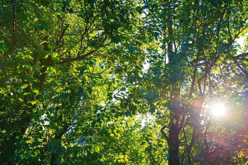 Summer evening sun