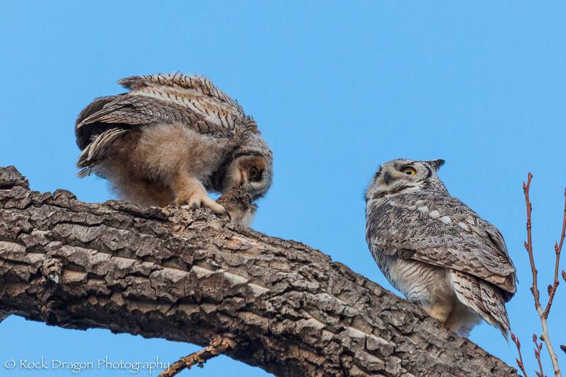 Owl-21.jpg