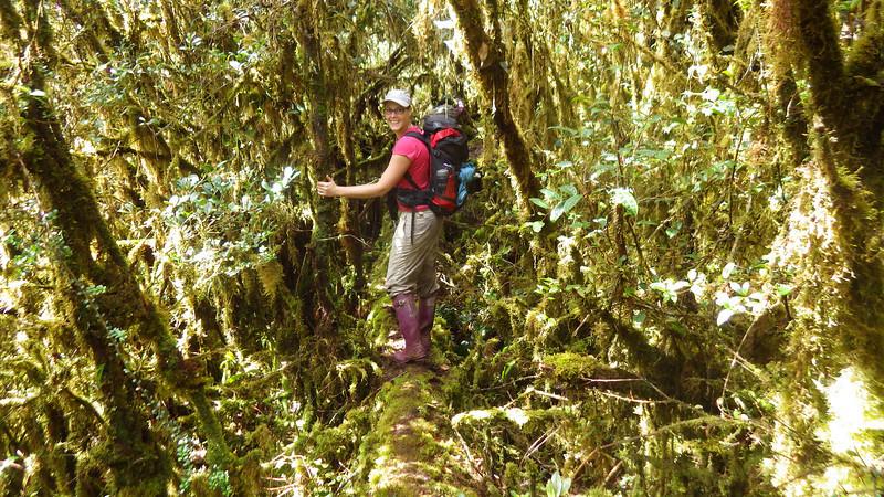Papua jungle 3