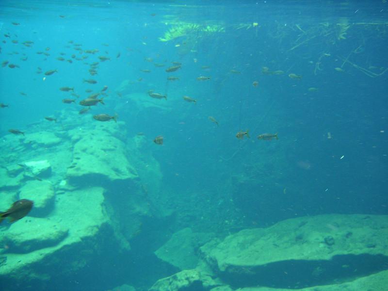 28 Lots of Fish.jpg