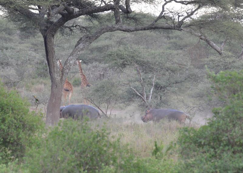 East Africa Safari 293.jpg