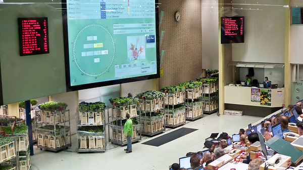 5.  Aalsmeer flower auction, May 4, 2009