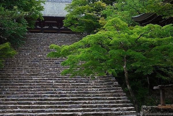 Jingo-ji Temple image copyright Damien Douxchamps